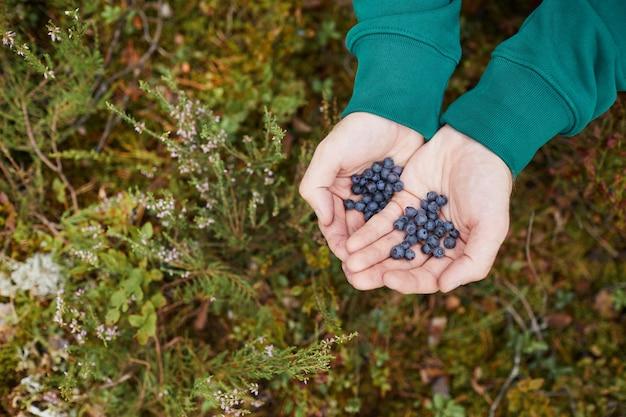Vista dall'alto ravvicinata di mani maschili che tengono mirtilli nella foresta escursioni in viaggio e prodotti freschi con...
