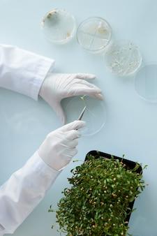 Vista dall'alto ravvicinata di un irriconoscibile scienziato femminile che studia campioni di piante nella capsula di petri mentre si lavora al laboratorio di biotecnologia, spazio di copia