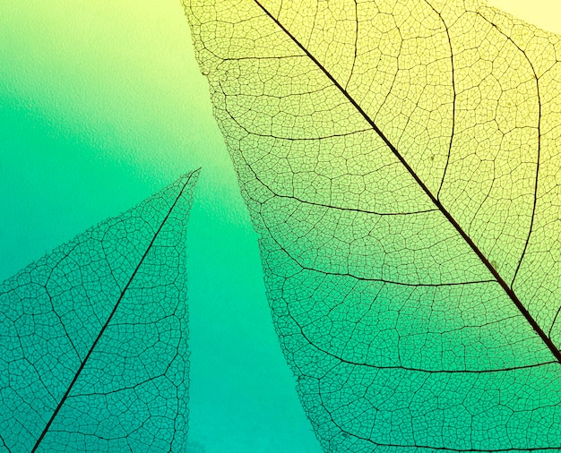 Vista dall'alto di foglie traslucide di tonalità colorate