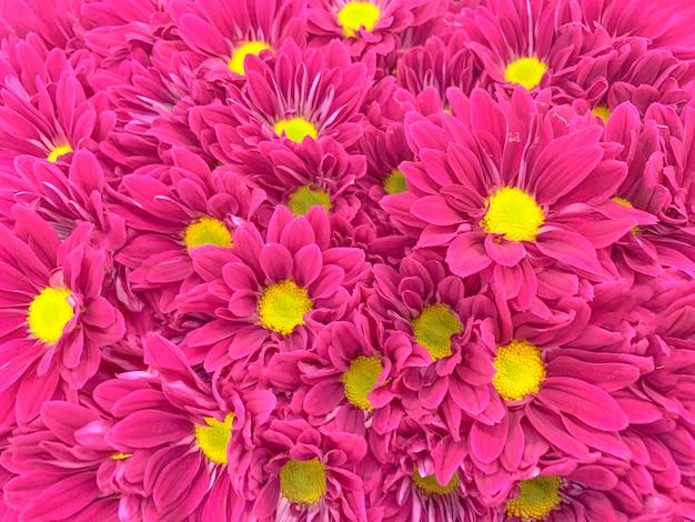 Vista dall'alto di fiori colorati pastelli