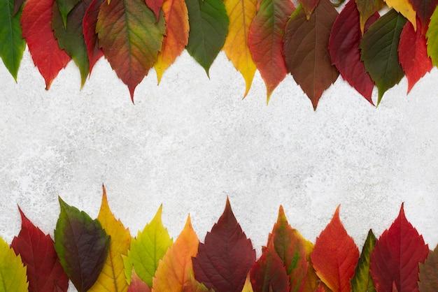 Vista dall'alto del telaio di foglie colorate differenti