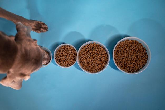 Vista dall'alto del cane che mangia dalla ciotola più piccola mentre si trova di fronte a ciotole di varie dimensioni piene di cibo secco per cani