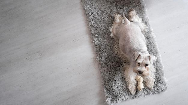 Cane vista dall'alto sdraiato sul tappeto