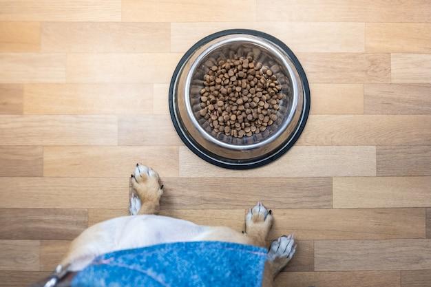 Vista dall'alto del cane pronto a mangiare cibo dalla ciotola. punto di vista di un cucciolo seduto davanti a una ciotola con il cibo al chiuso.