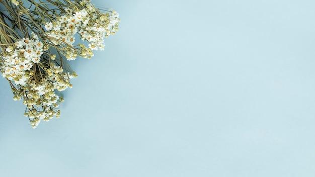 Vista dall'alto di fiori di camomilla essiccati. copia spazio