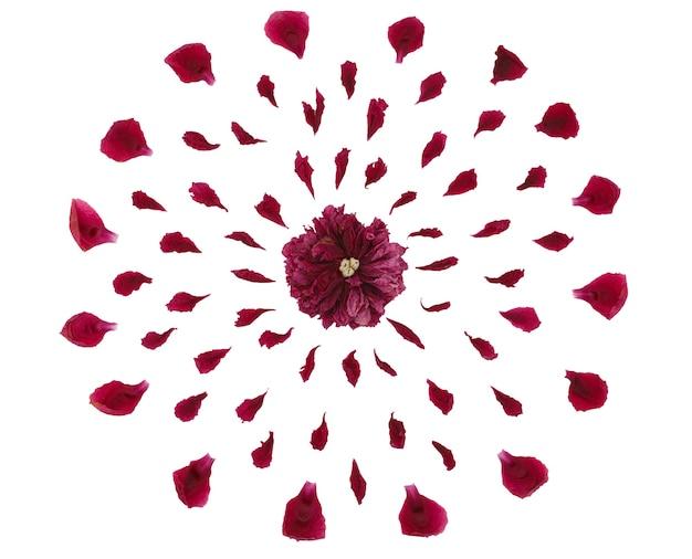 Vista dall'alto di un motivo floreale di petali di peonia. composizione di fiori su uno sfondo bianco fatti a mano. primo piano fotografato.