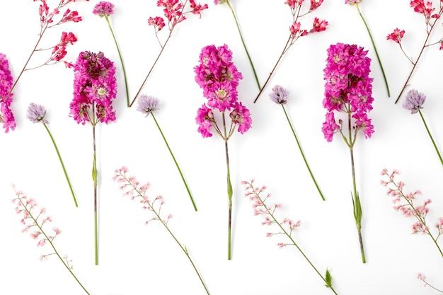 Vista dall'alto di una composizione floreale su sfondo bianco. un modello di boccioli fioriti di piante da giardino e foglie di felce.