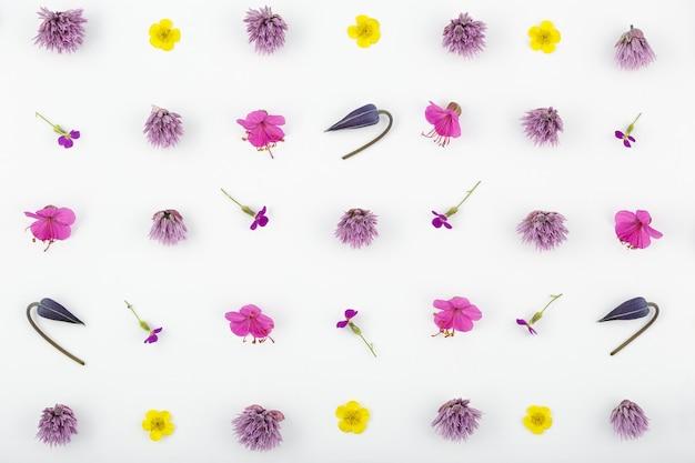 Vista dall'alto di una composizione floreale su sfondo bianco. un modello di boccioli di piante da giardino e foglie di felce.