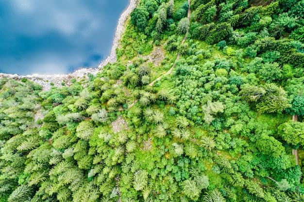 Vista dall'alto della foresta sulla riva del lac noir, un lago nelle montagne dei vosgi, france