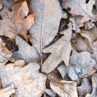 Vista dall'alto di foglie gialle secche congelate - sfondo naturale. mattina d'inverno.