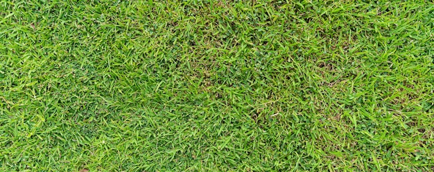 Vista dall'alto dello sfondo naturale di texture terra erba verde in primavera fresca.