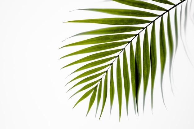 Vista dall'alto foglie verdi su bianco
