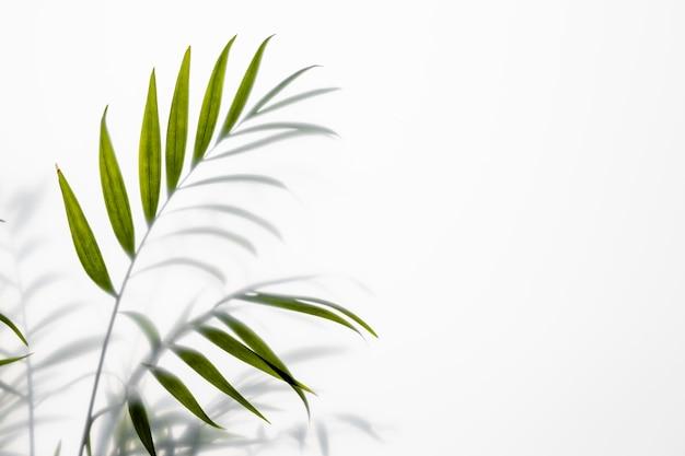 Pianta verde vista dall'alto su bianco con lo spazio della copia