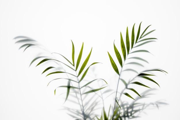 Pianta verde vista dall'alto su bianco