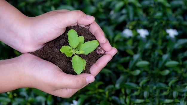 Mani di vista superiore che tengono pianta giovane su sfondo naturale