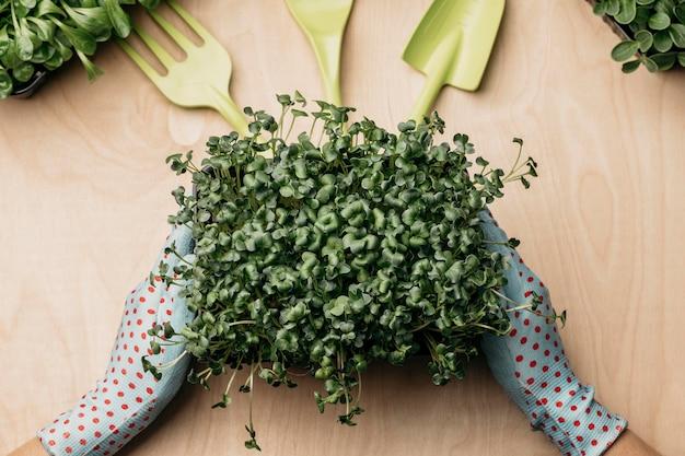 Vista dall'alto delle mani con i guanti che tengono le erbe