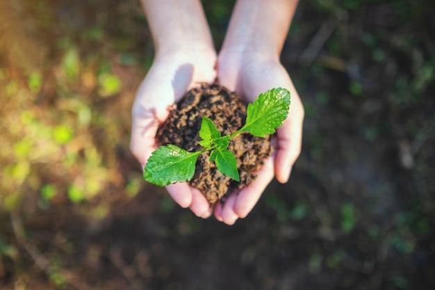 Immagine vista dall'alto delle mani che tengono un piccolo albero con il terreno per crescere con lo sfondo della natura