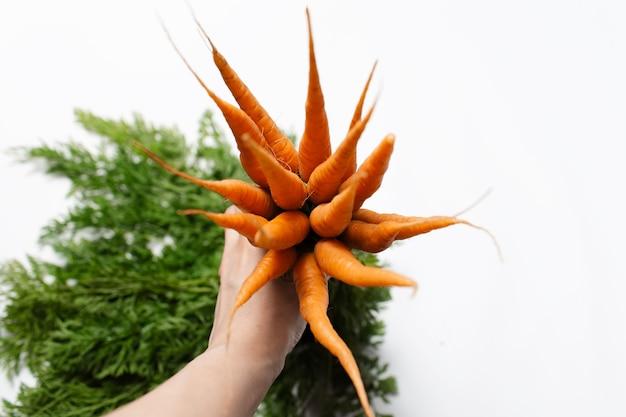 Vista dall'alto della mano maschile che tiene un mazzo di carote fresche su sfondo bianco.
