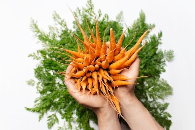 Vista dall'alto delle mani maschili che tengono il mazzo di carote su sfondo bianco.