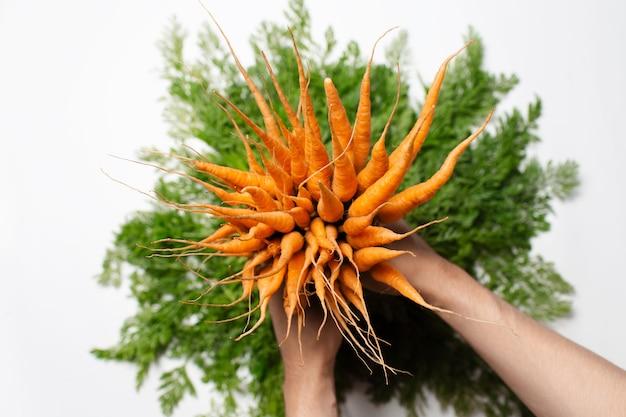 Vista dall'alto delle mani maschili che tengono il mazzo di carote fresche su sfondo bianco.
