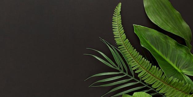 Vista dall'alto di più foglie con felce e copia spazio
