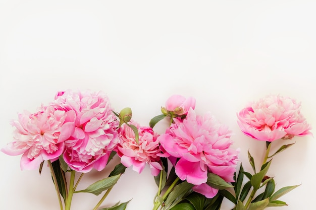 Vista dall'alto di fiori di peonia rosa con spazio di copia. sfondo floreale.
