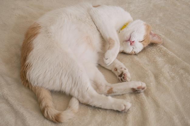 Ritratto di vista dall'alto del bellissimo gatto bianco e arancione che si trova e dorme su una coperta