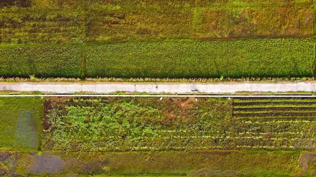 Vista dall'alto delle risaie con una strada al centro