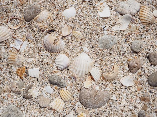 Vista dall'alto di conchiglie sulla sabbia in una giornata di sole