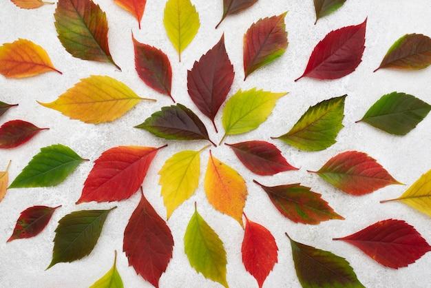 Vista dall'alto della selezione di bellissime foglie autunnali