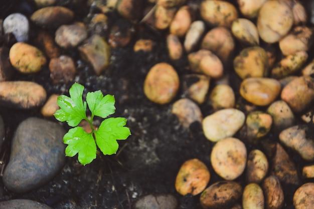 Vista dall'alto di una piccola pianta che cresce nel terreno nero e nei ciottoli