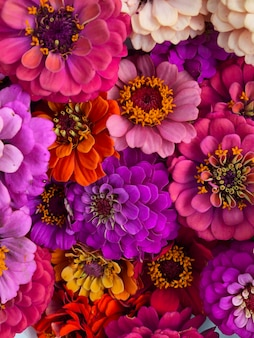 Vista dall'alto su alcuni mazzi di fiori freschi gerbere. primo piano di bellissimi fiori. sfondo e concetto di fiore