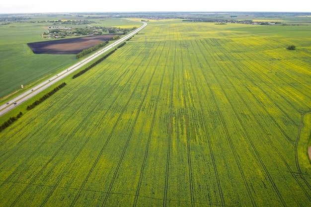 Vista dall'alto del verde seminato in belarus.agricoltura in belarus.texture.
