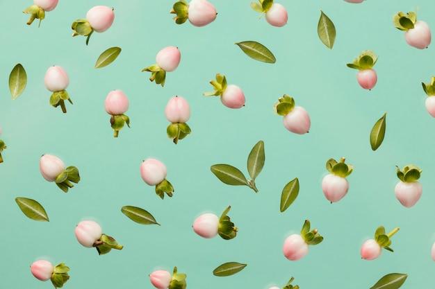 Vista dall'alto di boccioli di fiori primaverili