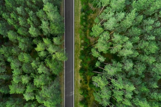 Vista dall'alto sulla cima di alti pini e strada nel mezzo