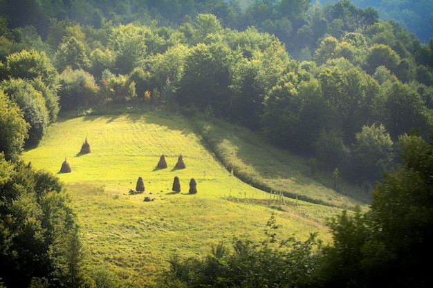 Vista dall'alto delle cime degli alberi delle foreste di conifere nei carpazi, sullo sfondo