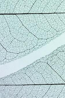 Vista dall'alto di foglie traslucide con tonalità colorate