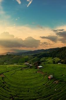 Vista dall'alto e verticale dei campi terrazzati nel distretto di mu cang chai, provincia di yen bai, vietnam