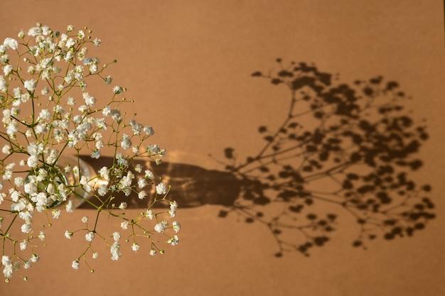 Vista dall'alto dell'ombra del fiore bianco su sfondo color sabbia. disposizione piatta. concetto estivo minimale con vista dall'alto gypsophila
