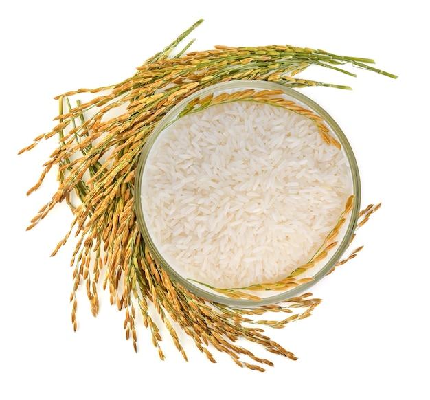 Vista dall'alto di riso bianco (riso al gelsomino tailandese) nella ciotola e riso non macinato isolato su bianco