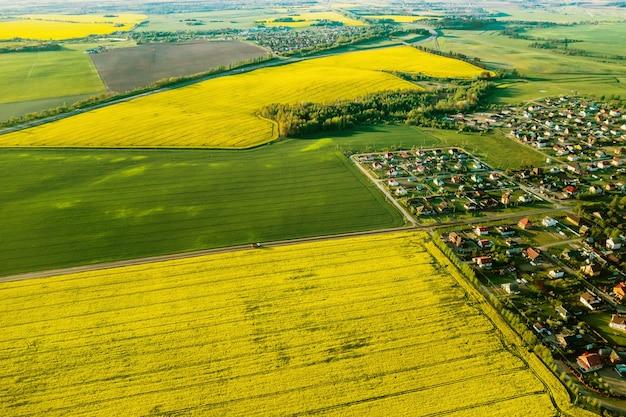 Vista dall'alto del campo di colza gialla e del villaggio. un campo seminato di colza in bielorussia. il villaggio è un campo di colza.