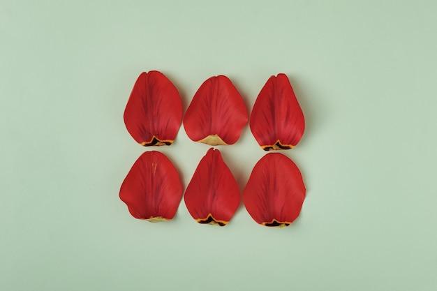 I petali strappati di un tulipano su uno sfondo verde in due file formano un rettangolo e un posto per il testo. concetto minimo di celebrazioni primaverili per san valentino e festa della mamma.