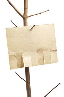 Carta strappata per annuncio su un ramo di albero isolato su bianco