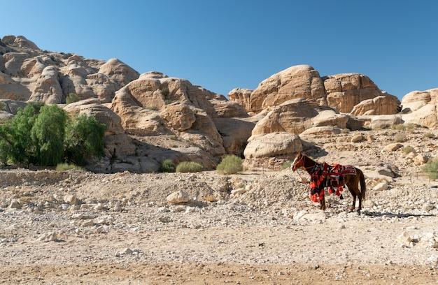 Cavallo turistico sulla strada per petra