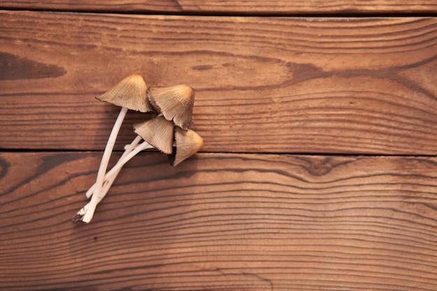 Fungo tossico si trova sfondo tavolo in legno i funghi velenosi non mangiano. stagione farmaci micelio spazio libero per il testo
