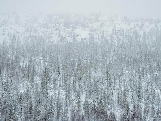 Foresta tossica invernale su una collina vicino allo stabilimento metallurgico di monchegorsk in russia.