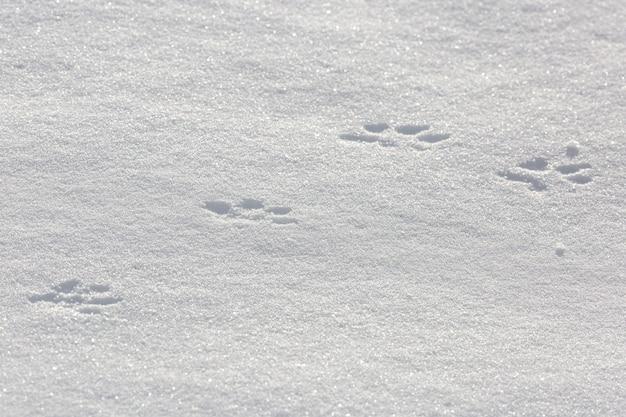 Tracce di un animale nella neve.