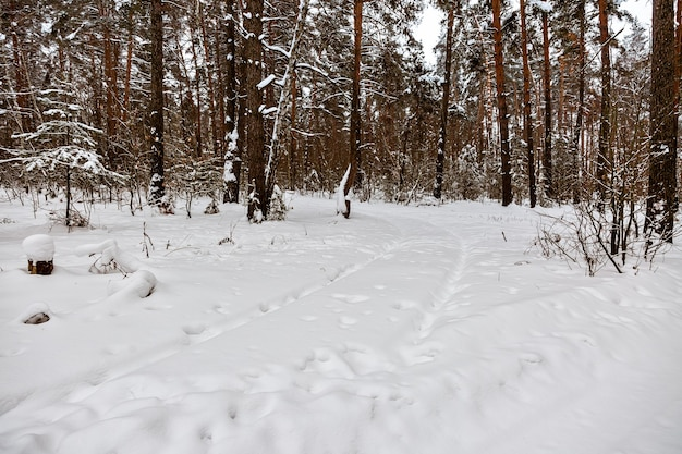 Traccia nella neve strada forestale invernale senza persone tracce di ruote e pneumatici di suv attraverso il cumulo di neve