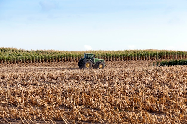 Il trattore raccoglie i gambi ingialliti smussati del raccolto di mais maturo di una pianta vicino il cielo blu di stagione autunnale