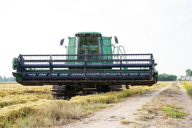 La raccolta del trattore in un campo di riso accanto a un sentiero con una fattoria